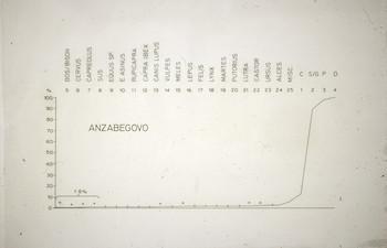 NandrisEpson005.tif