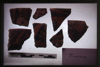 NandrisEpson114.tif